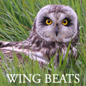 Wing Beats: British Birds in Haiku